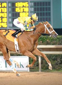 Bravura - The Groovy Stakes - 01-23-16 - R08 - HOU - Finish.jpg