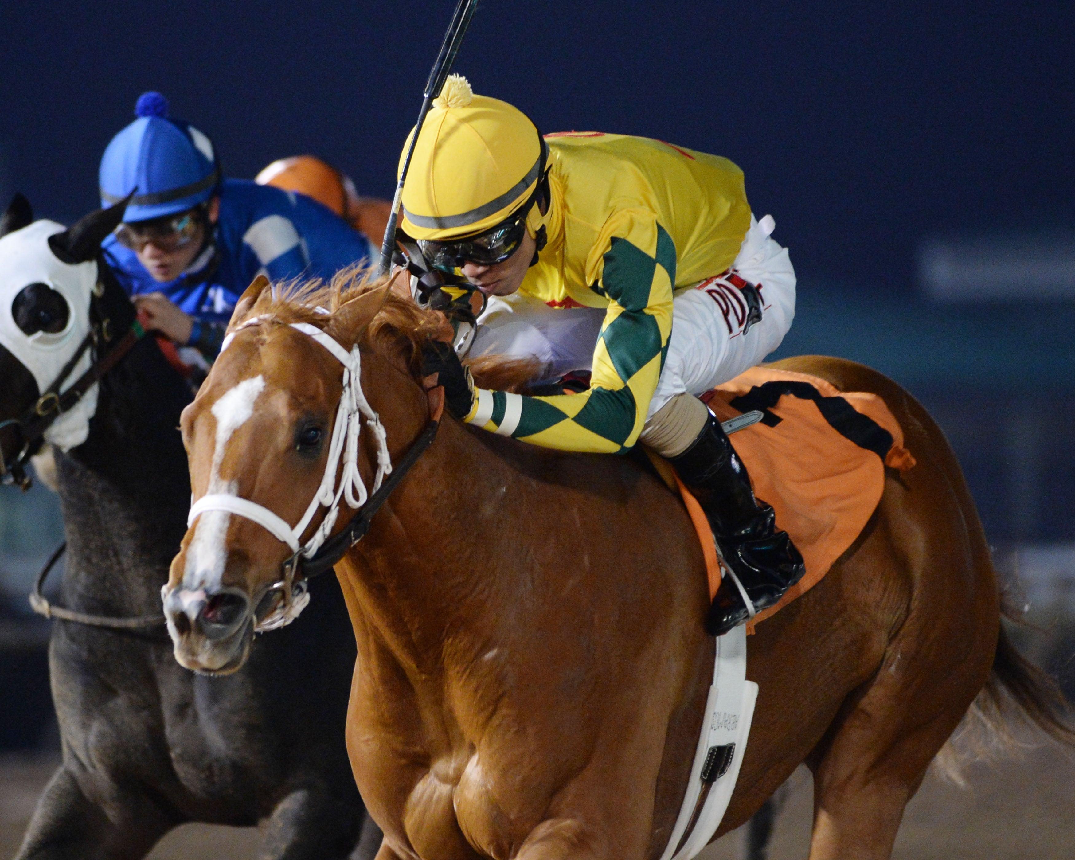 Bravura - The Groovy Stakes - 01-23-16 - R08 - HOU - Inside Finish.jpg