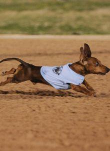 Wiener Dog Thumb.jpg